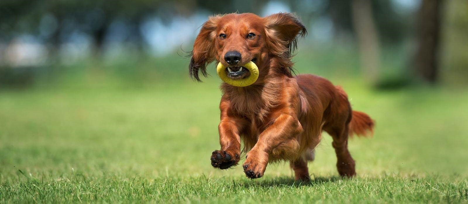 Tips for choosing the right toys and activities for your dog